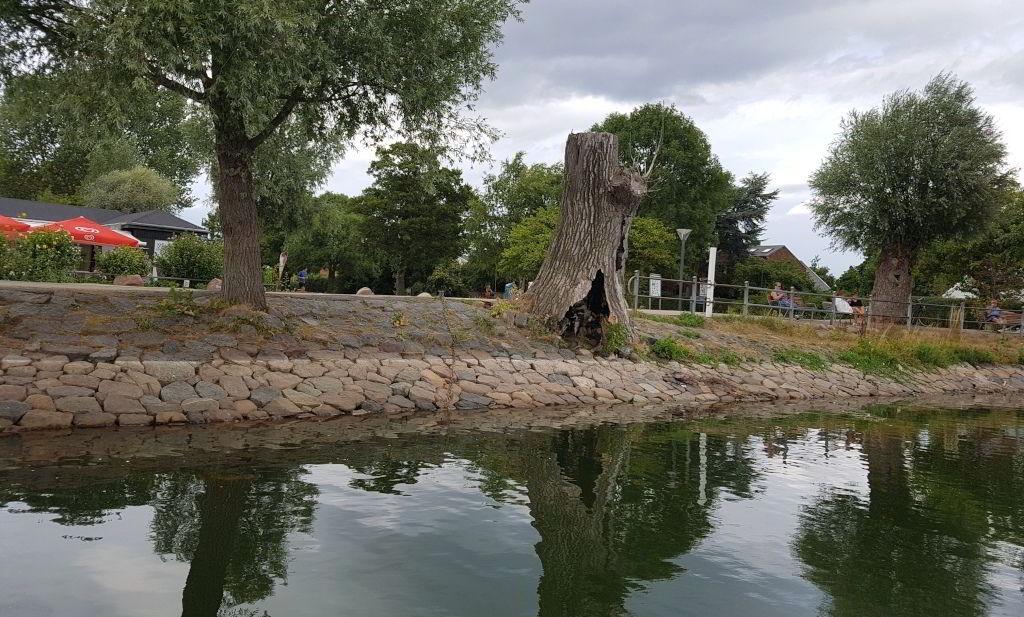 Det hule træ ved Damhussøen