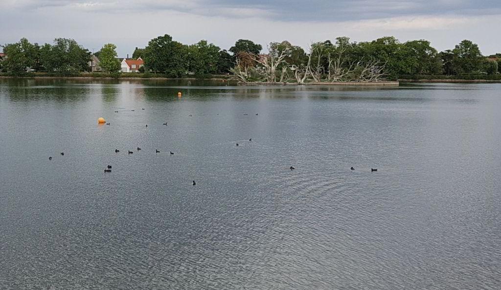 Udsigt ud over Damhussøen