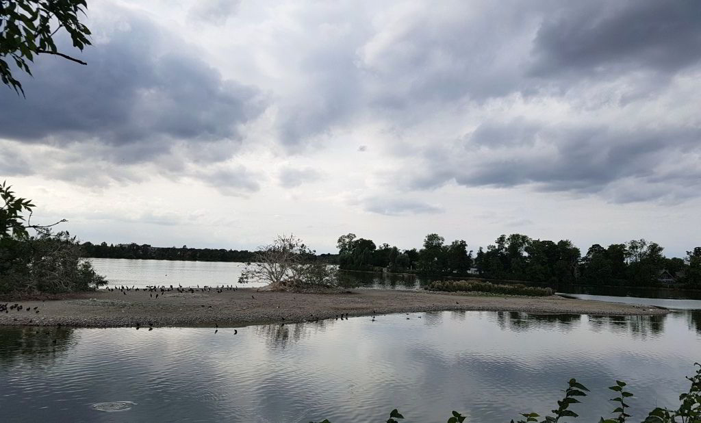 Den anden fugleø i Damhussøen