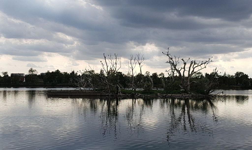 Den ene fugleø i Damhussøen