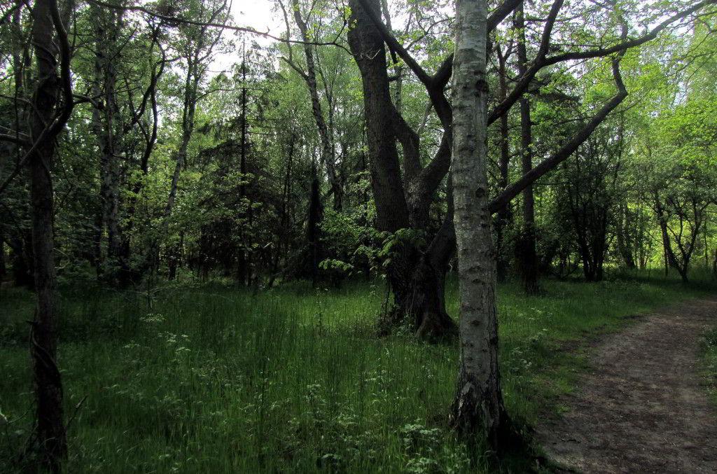 Træer i skoven