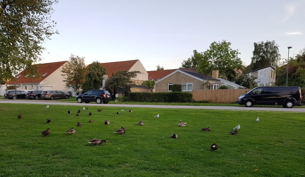 En god del af de forskellige fugle i Emdrup sø