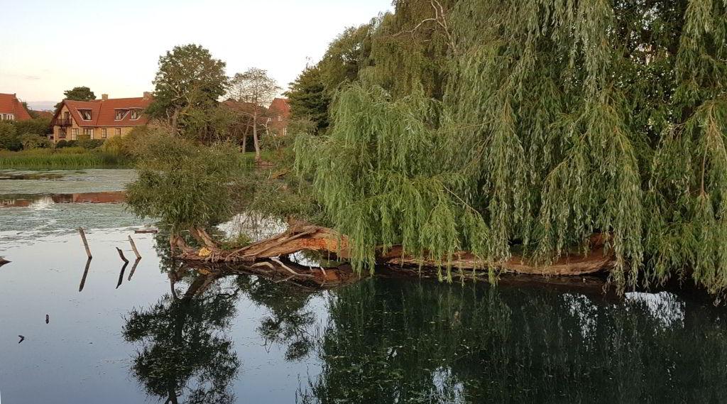 Træ i Emdrup sø