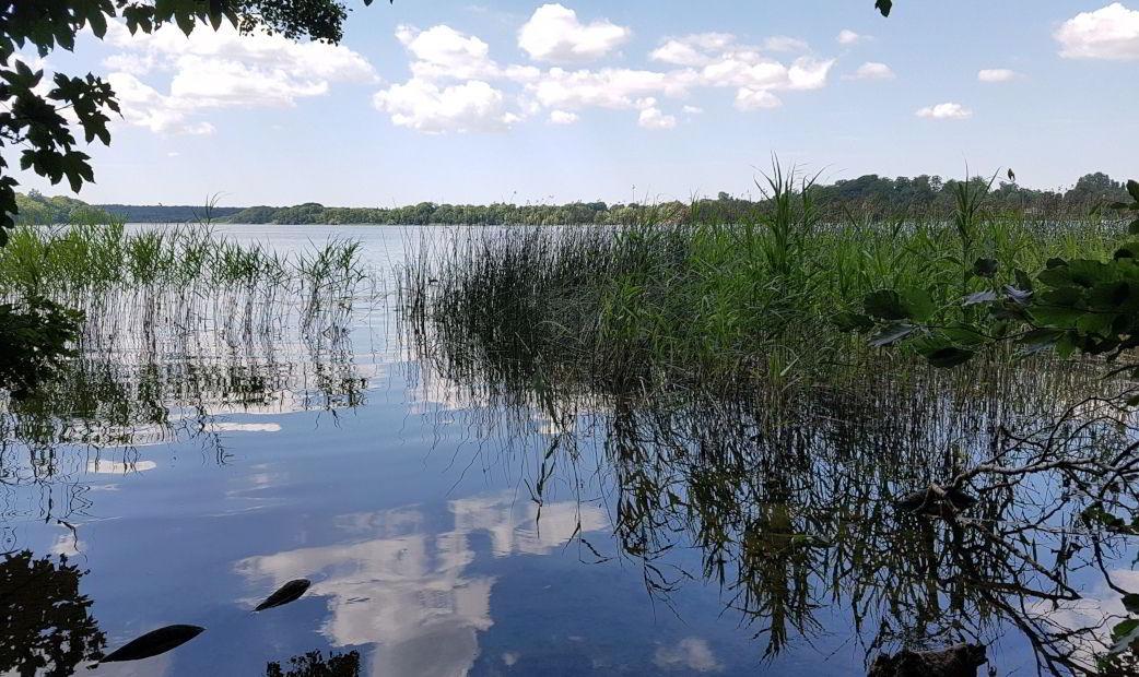 Genspejling i Farum sø