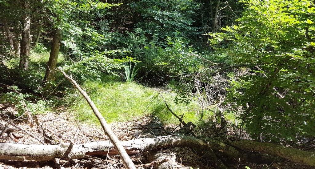 Skovens planter ved Farum