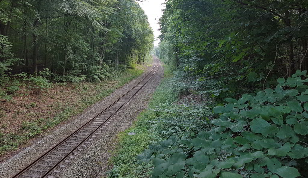Togspor gennem skoven ved Skarresø