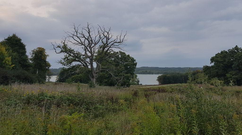 Afbladet træ ved Skarresø