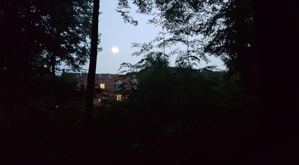 Sølyst set fra skoven