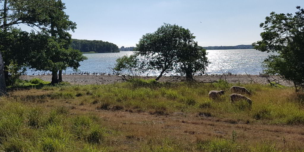 Fuglereservatet ved Tuelsø